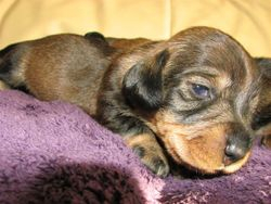 bitch pup 14 days 5