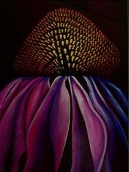 Echinacea    I/D 303C