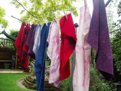 Dyed fabrics in the garden!