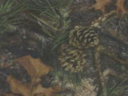Mixed Pine