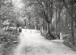 BOKSKOGEN 1901