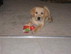 2-month-old Jasper