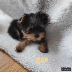 """Zoe"""