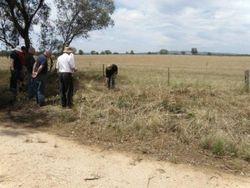 Community Bus Trip - CMN Ranger explaining Spiny Rice Flower (Pimelea spinescens) burn site