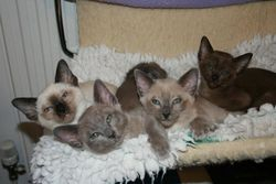 The Rainbow litter - Tegan's first litter 2010