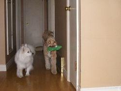 Rocky and Kona