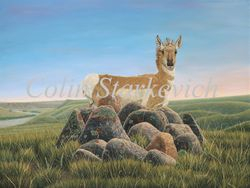 """Enigmatic Places - Pronghorn (36 by 48"""" oil on canvas) On Traveling Exhibit with Artists For Conservation (AFC)"""