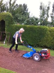 Rotovating the soil in the curved border
