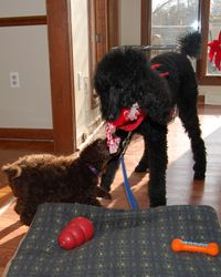 Truffles playing with his new friend Mickey.