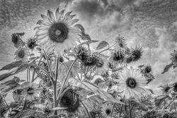 Sun and Clouds BW