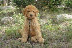 Sadie/You got a cute one!!