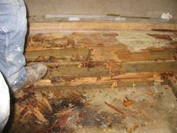 Floor Rot2