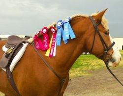 Hunt Seat Under Saddle Show Winner!