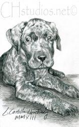 Duchess Pet Portrait Commission