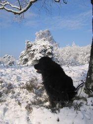 Shunka in sneeuw renderklippen