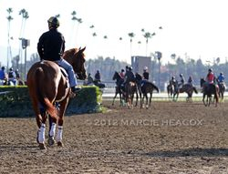 Shackleford Heads Out