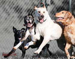 Charlie,Spud,Chance,Scout