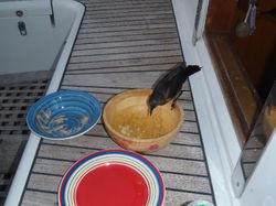 Another cheeky bird pinching our crisps....