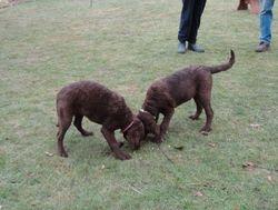 Tia and Lola 20/12/10