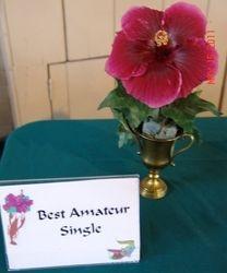 BEST AMATEUR SINGLE - HEARTBEAT - Theresa & Mark Gore, Lafayette, LA
