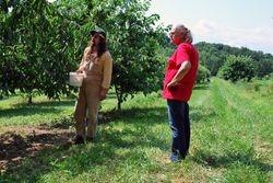 Cherry Picking tips