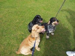 Duncan, Cora & Rowan