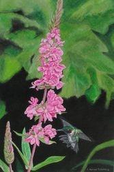 Summer Hummingbird