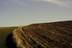 Field ploughed