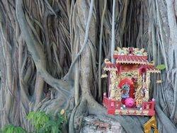 Sacred Tree / Geheiligde Boom
