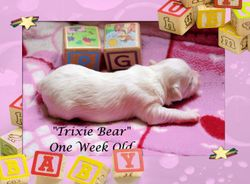 Trixie Bear
