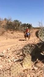 Aaron and Rabbit in West Texas