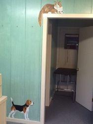 Beagle/Kitty