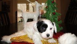 Zoey December 2010
