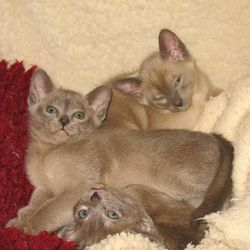 6 weeks old - Bertie, Hurricane and Purry Boy