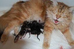 De f�rste 4 kattungene...