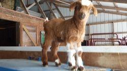 Flash Dawg-Buck born 1/26/14