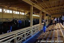Santa Anita Saddling Barn