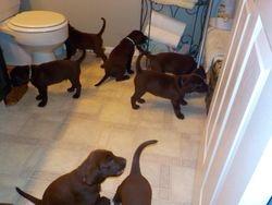 Oops I left bathroom door open
