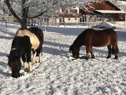 Schnee und Pferde