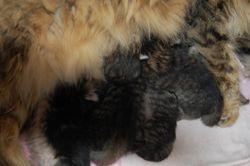 Kullet nyfødt, første dag. 2