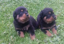 dogs 4 weeks