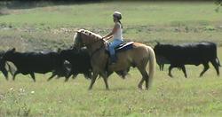 No Fear of Cows!