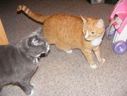 Morris and Gus