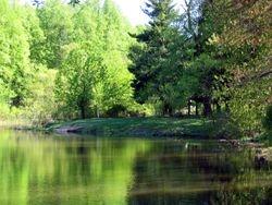 Pine Lake Late Spring