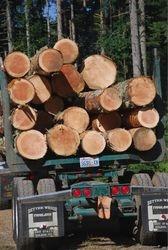 Logs to Market by Steve Webster