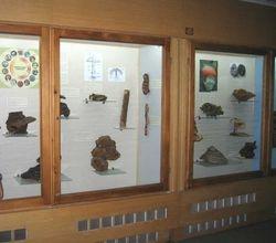 Fungi Display in Macedonian Natural Science Museum