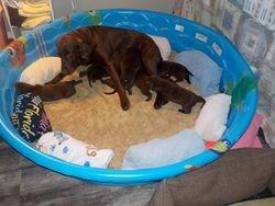 Hope is feeding her pups again