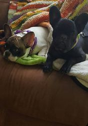 Cookie & Velvet