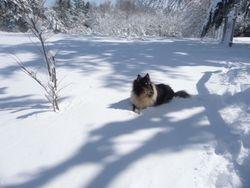 Prissy Loves the Snow