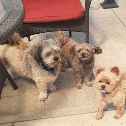 Trio of pups